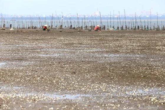 Mass shellfish kill causes farmers to suffer huge losses ảnh 12