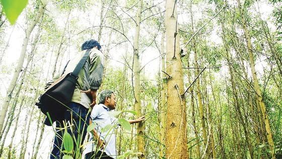 Vietnam develops sustainable afforestation ảnh 1