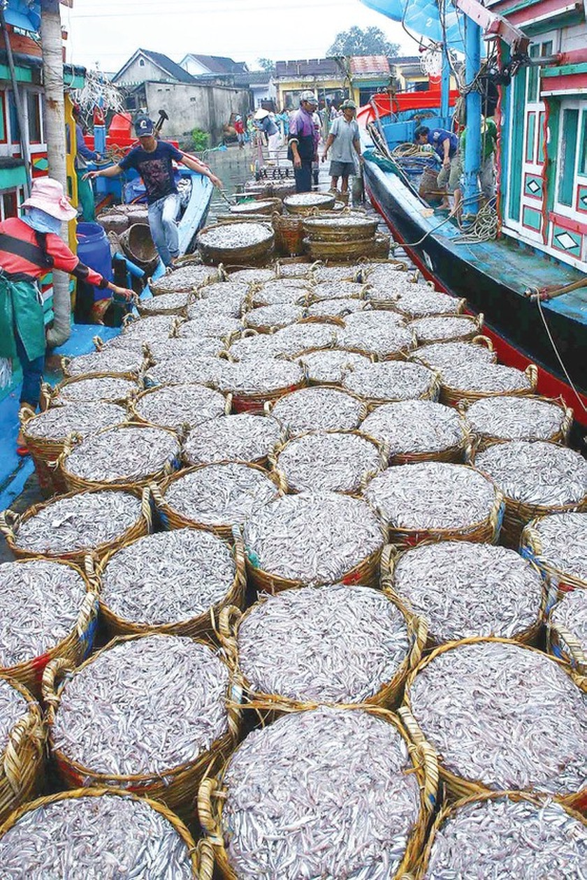 Gifts from the Sea in early summer ảnh 5