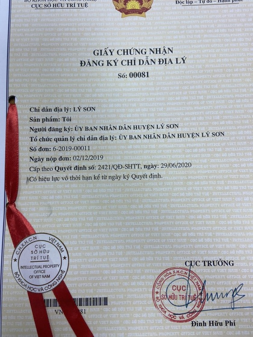Ly Son garlic receives certificate of geographical indication registration ảnh 1
