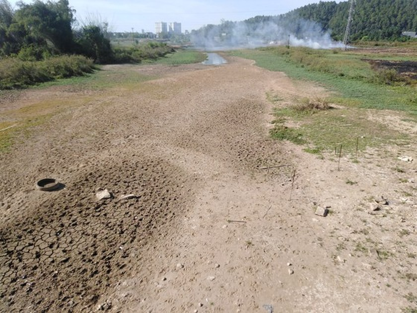 Thousands of hectares of rice in Nghe An Province dry due to hot temperatures ảnh 1