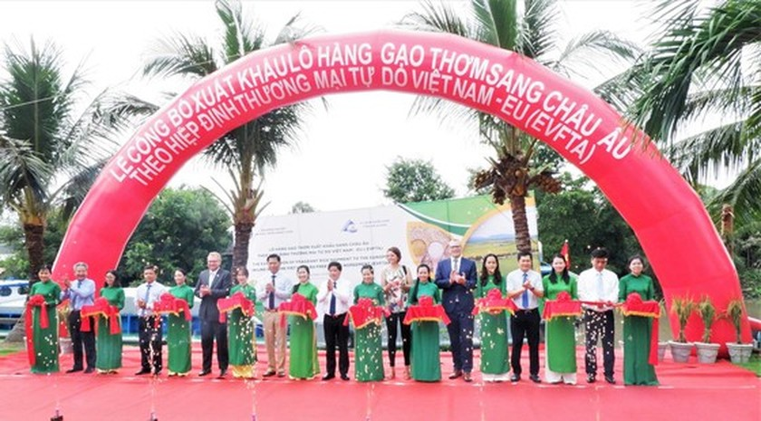 First batch of fragrant rice in An Giang Province to be exported to EU ảnh 1