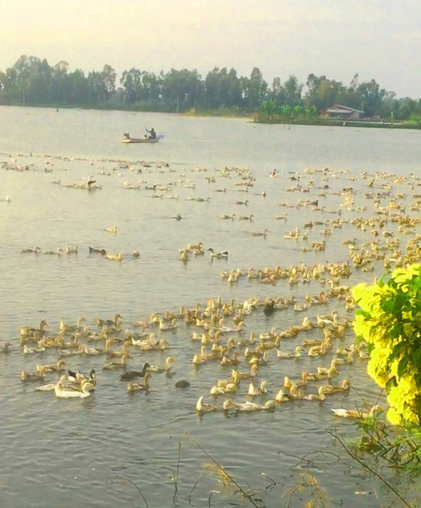 Nearly 10,000 hectares of rice, fruit trees destroyed by heavy rains, floods ảnh 1
