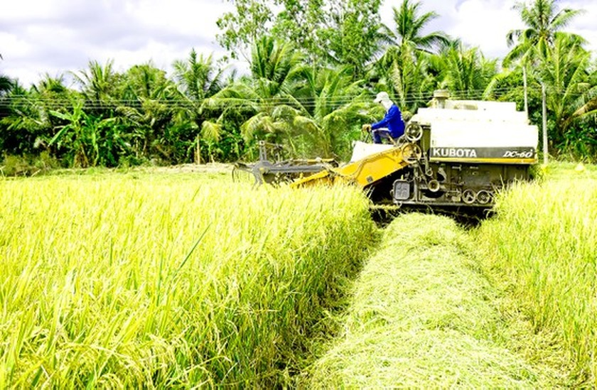 Mekong Delta farmers put effort into elevating Vietnamese rice ảnh 2