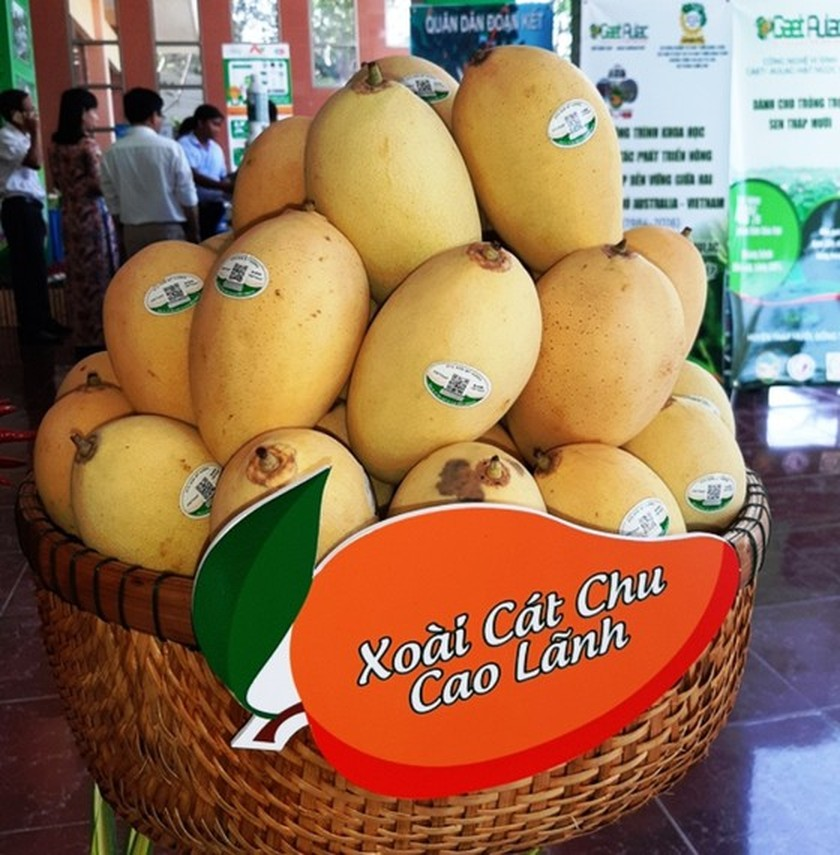 Global market remains potential for Vietnam's mango industry ảnh 3