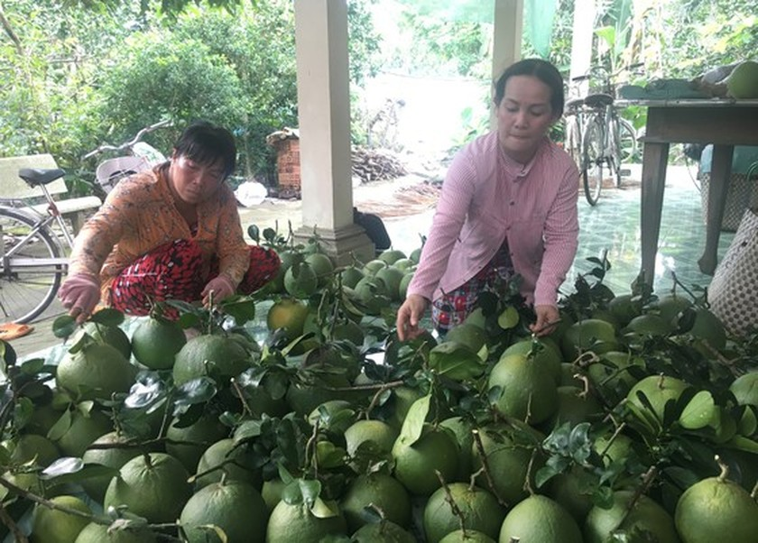Reducing logistics costs to strengthen competitiveness for agricultural products ảnh 1