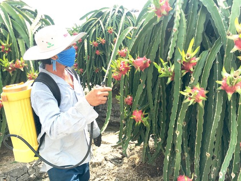 Solutions needed for agricultural products to no longer call for rescue ảnh 1