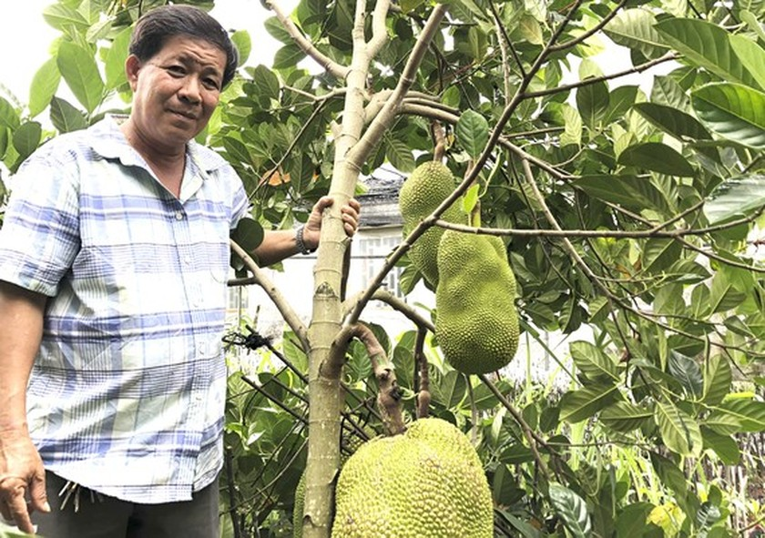Farmers in Cho Lach District earn high income from sapling production ảnh 1