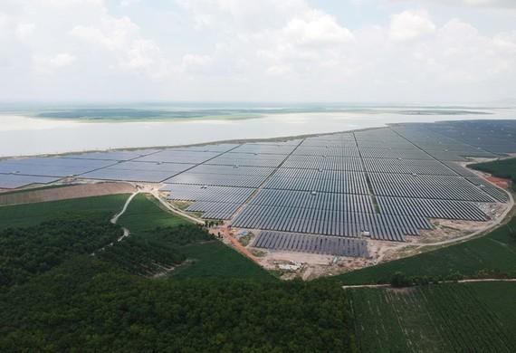 Renewable energy companies thrive on rising demand ảnh 1