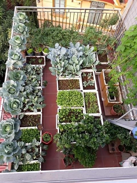 Urban gardens a bright spot during pandemic ảnh 2