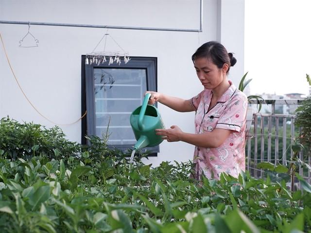 Urban gardens a bright spot during pandemic ảnh 1