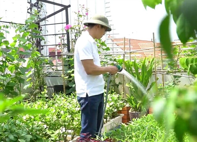 Urban gardens a bright spot during pandemic ảnh 4