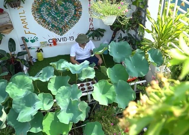 Urban gardens a bright spot during pandemic ảnh 5