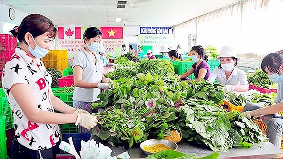 Điểm sơ chế rau của HTX Phước An, huyện Bình Chánh, TPHCM