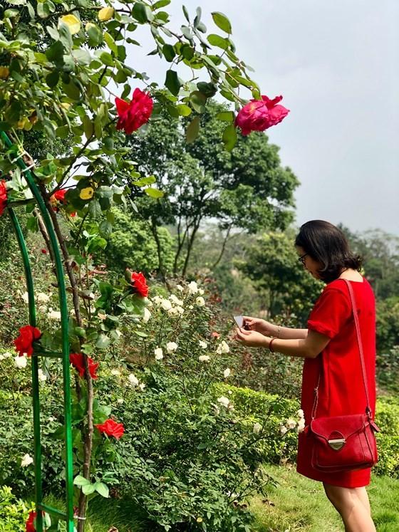 Paragon Resort Bavi recognized for largest rose garden ảnh 1