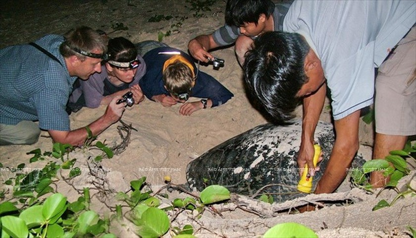 Con Dao National Park – nesting haven for sea turtles ảnh 1