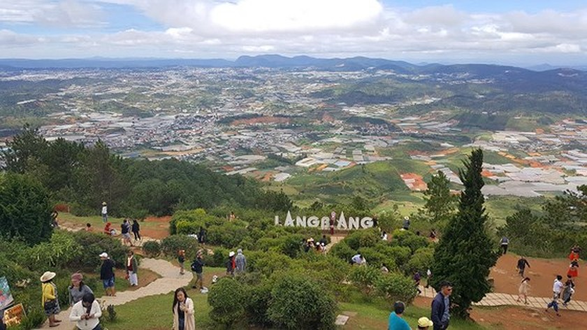 1,000 cherry blossom trees planted on Langbiang mountain ảnh 1