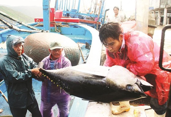 Development of seaside fishing villages in the central coastal region ảnh 5