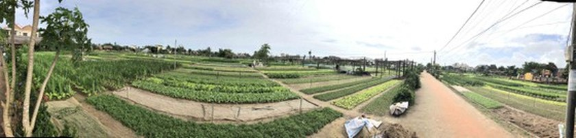 Hoi An's Tra Que Vegetable Village welcomes first New Year visitors ảnh 1