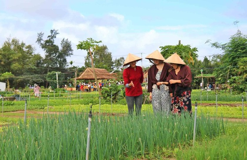 Hoi An's Tra Que Vegetable Village welcomes first New Year visitors ảnh 3