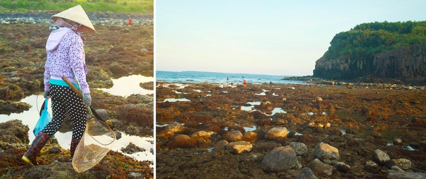 Quang Ngai provides tourists amazing view of nearshore spectacular coral reef ảnh 11