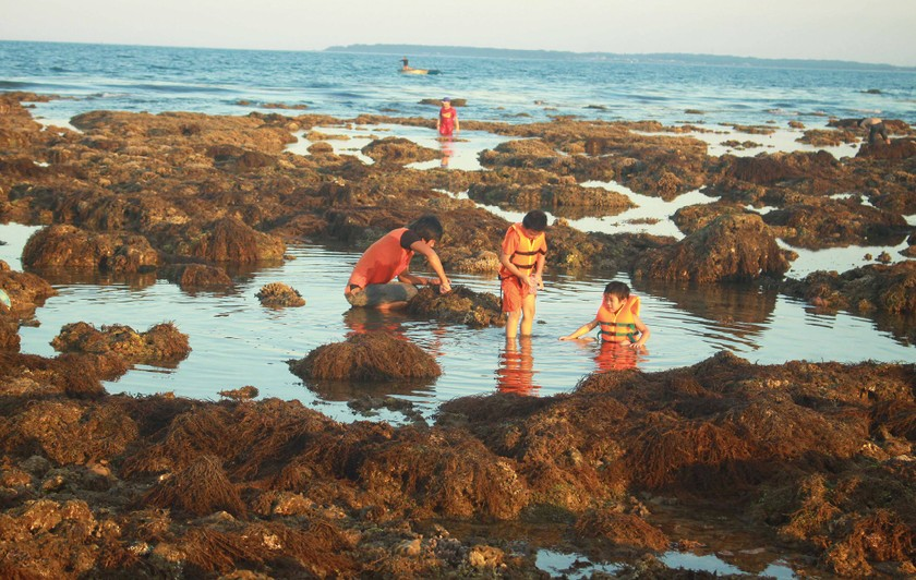 Quang Ngai provides tourists amazing view of nearshore spectacular coral reef ảnh 12