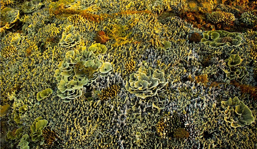 Quang Ngai provides tourists amazing view of nearshore spectacular coral reef ảnh 2