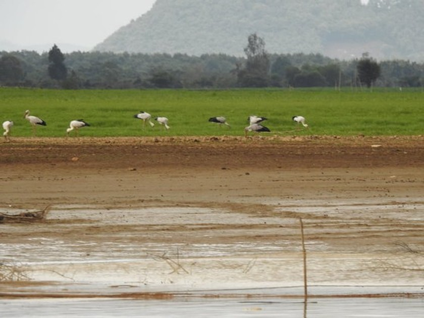 Rare birds flock to Dong Nai Culture and Nature Reserve ảnh 1