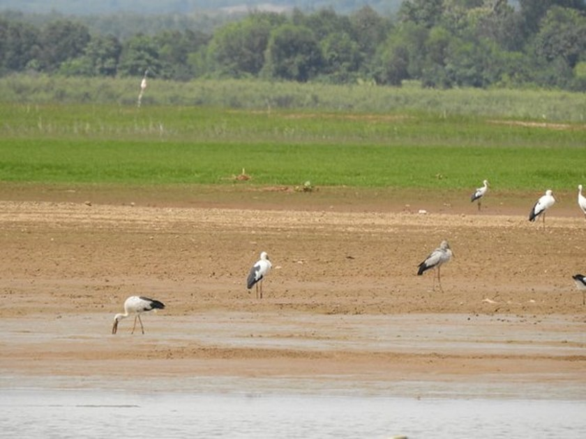 Rare birds flock to Dong Nai Culture and Nature Reserve ảnh 2