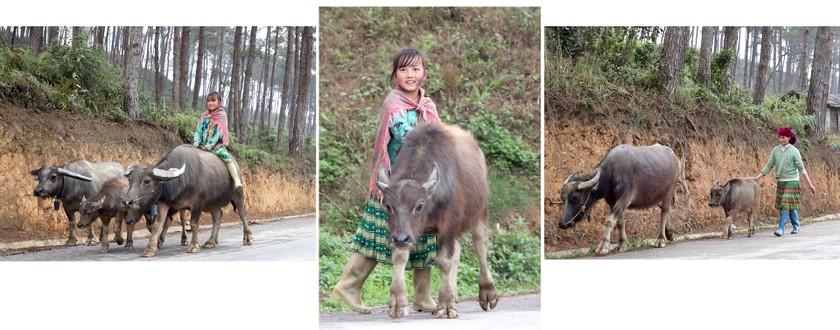 Beauty of women in Ha Giang Province's plateau of rocks ảnh 2