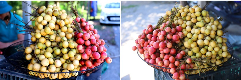 Beauty of burmese grape trees full of fruits in central mountainous district ảnh 18
