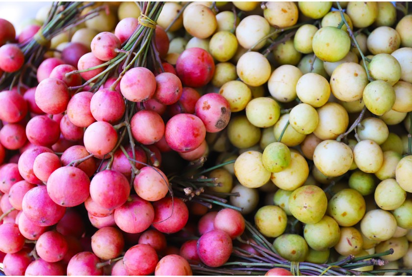 Beauty of burmese grape trees full of fruits in central mountainous district ảnh 19