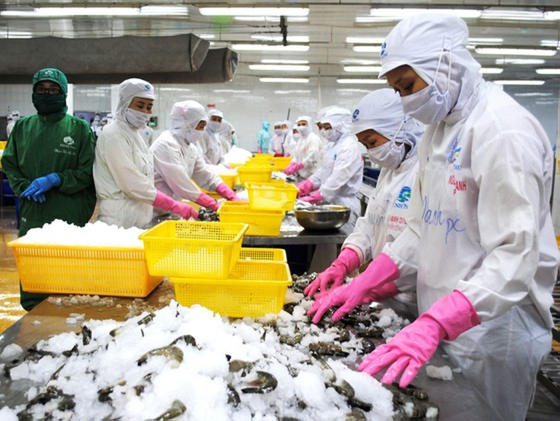 Coronavirus slashes farm produce export, businesses look forward to solutions ảnh 2