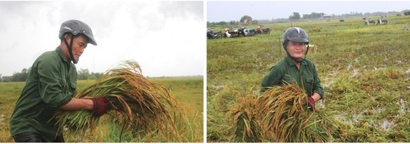 Central region's farmers flock to fields to save rice after storm ảnh 5