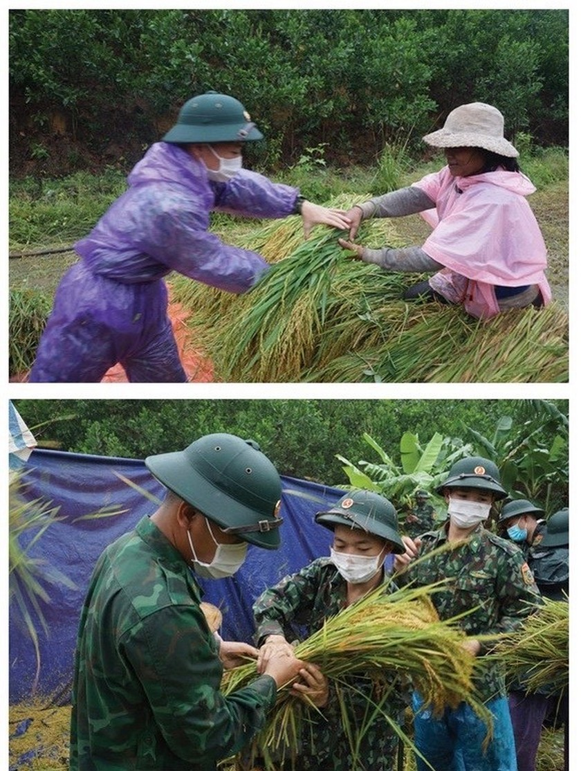 Central region's farmers flock to fields to save rice after storm ảnh 8