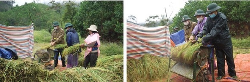 Central region's farmers flock to fields to save rice after storm ảnh 9