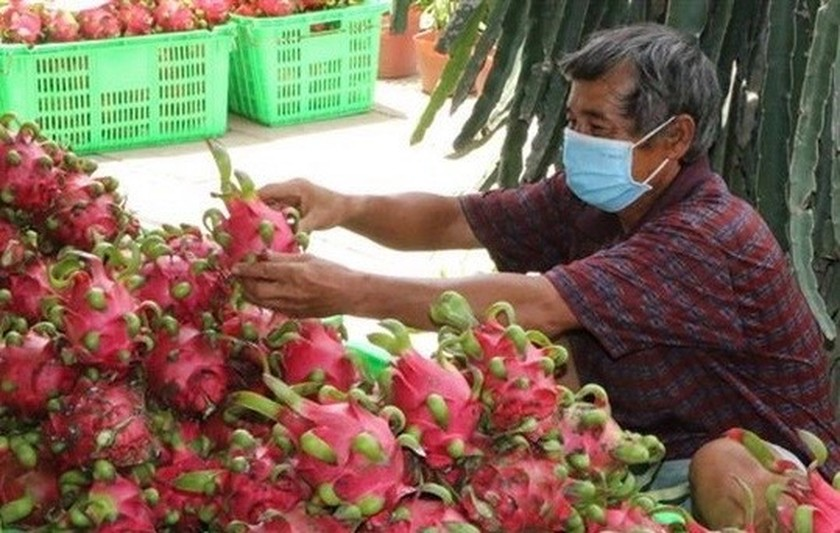 Potential grows for vegetable and fruit exports to US ảnh 1